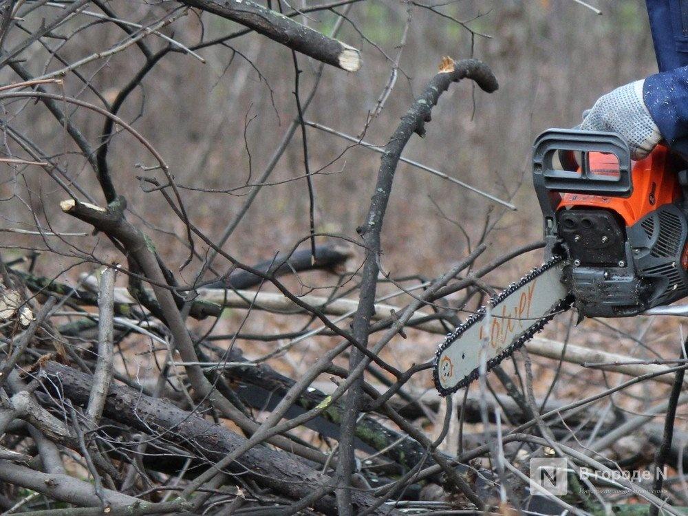 Сокольский предприниматель нарубил деревьев на 730 тысяч рублей - фото 1