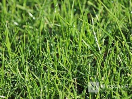 Зеленый газон появится на месте Шуваловской свалки