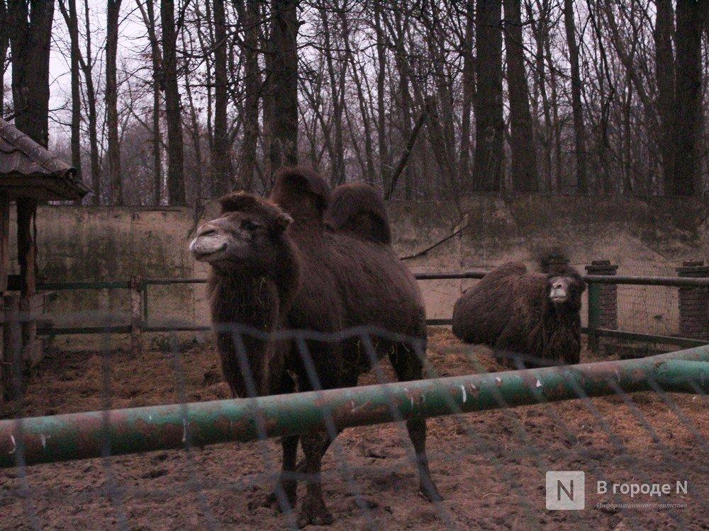Чем живет «Мишутка»: репортаж из закрытого нижегородского зоопарка - фото 7
