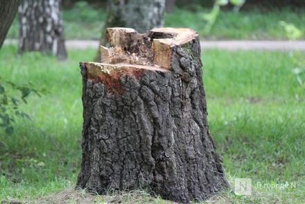 Более 100 тысяч рублей за срубленные деревья заплатил житель Выксы