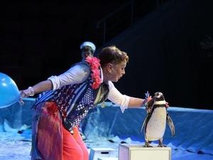 Кенгуру-боксер и дрессированные пингвины выступают на арене Нижегородского цирка