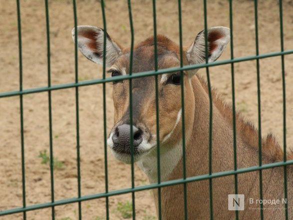 Выжить в пандемию: что происходило в закрытом зоопарке «Лимпопо» - фото 33