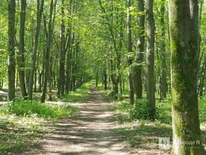 Более сотни деревьев парка «Швейцария» может убить благоустройство