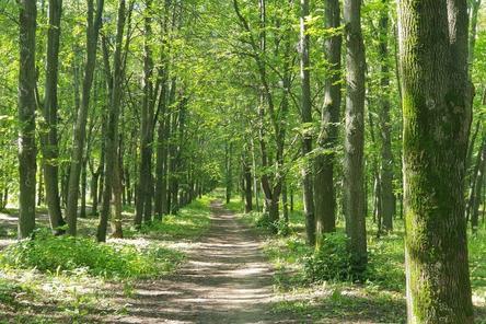 Почти треть планируемых деревьев высадили в парке «Швейцария»