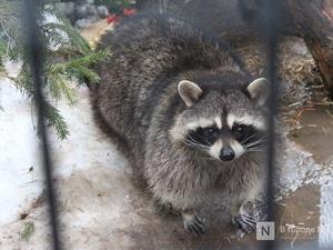 32 тысячи «доброрублей» перевели нижегородцы на корм животным в зоопарке