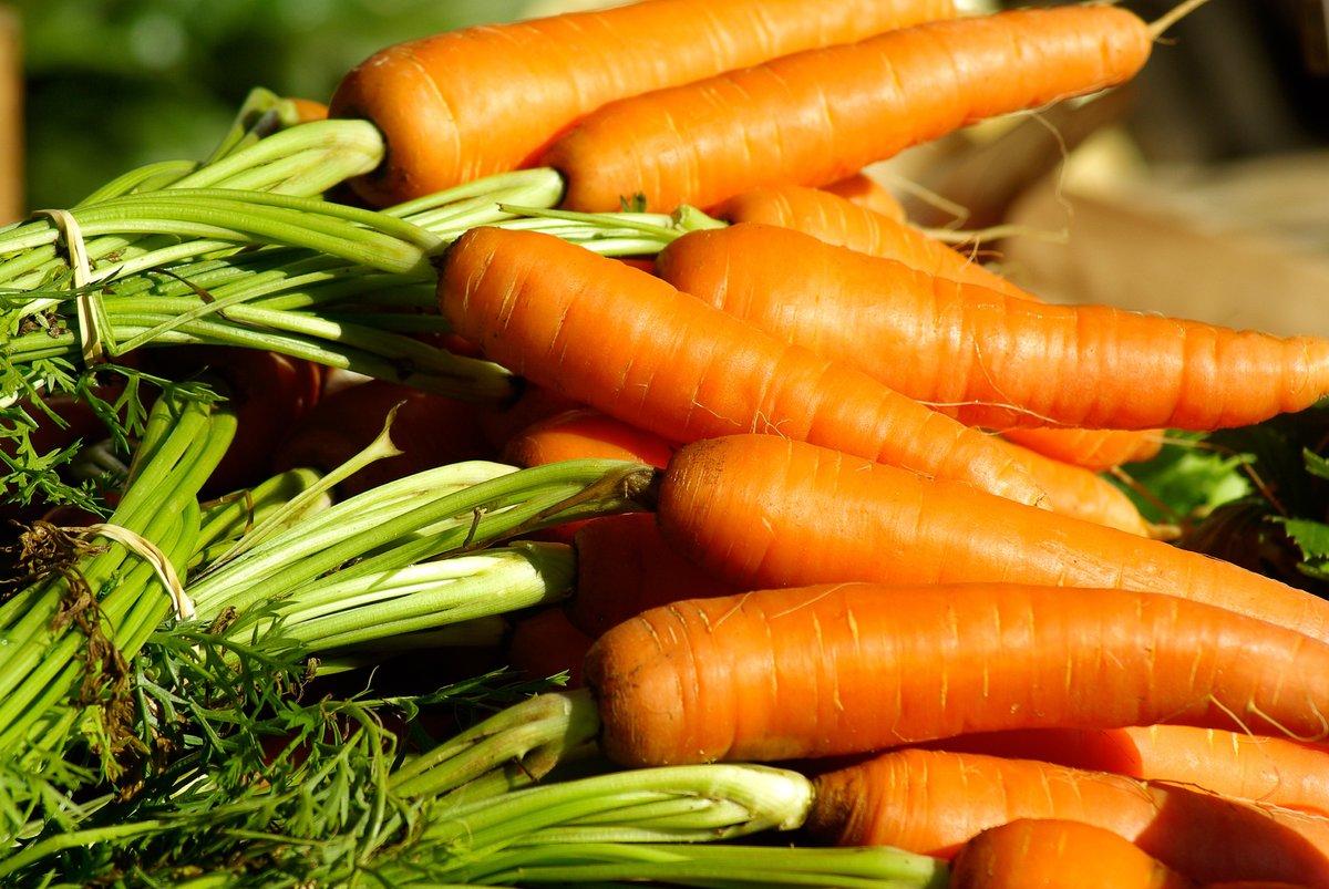 Морковь и картофель подешевели в Нижегородской области - фото 1
