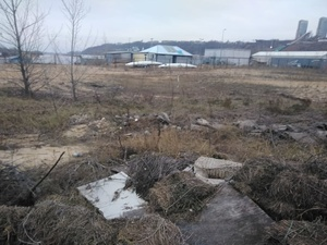 С арендаторами участков на Гребном канале могут расторгнуть договор из-за «нехозяйского отношения»