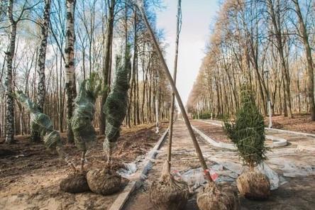 Новые деревья начали высаживать в парке «Швейцария»
