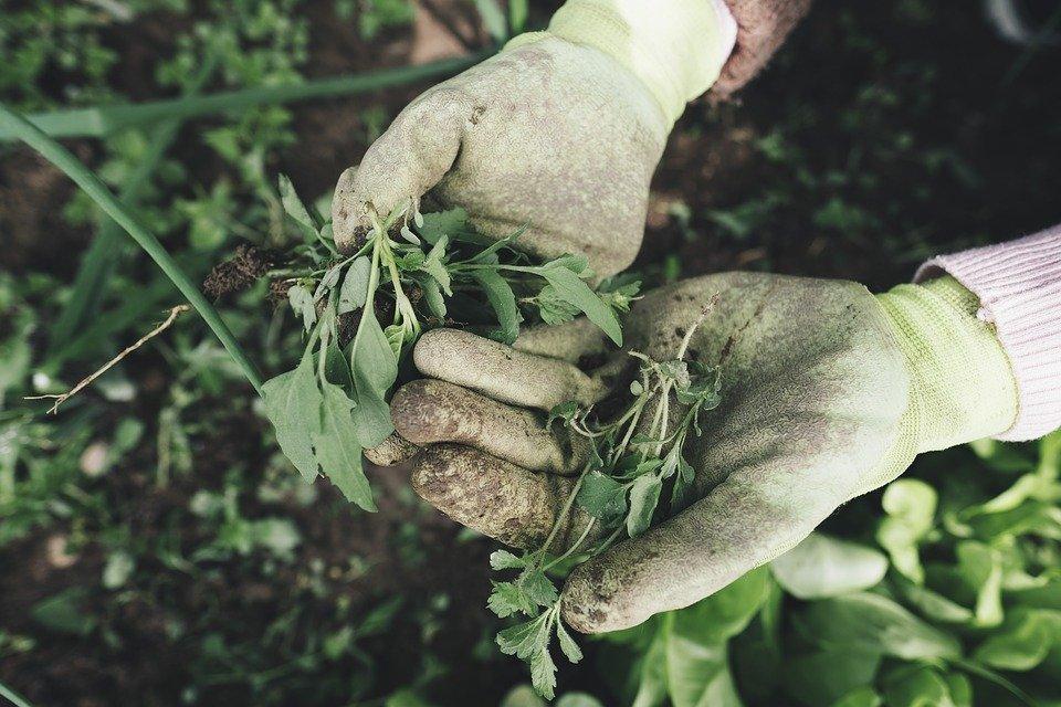 8 надежных способов избавиться от сорняков в огороде - фото 1