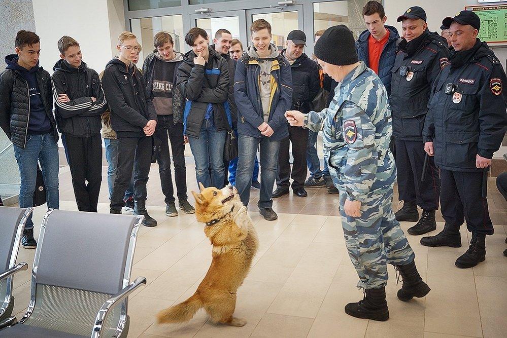 Искать наркотики на вокзале нижегородским полицейским помогает корги - фото 1