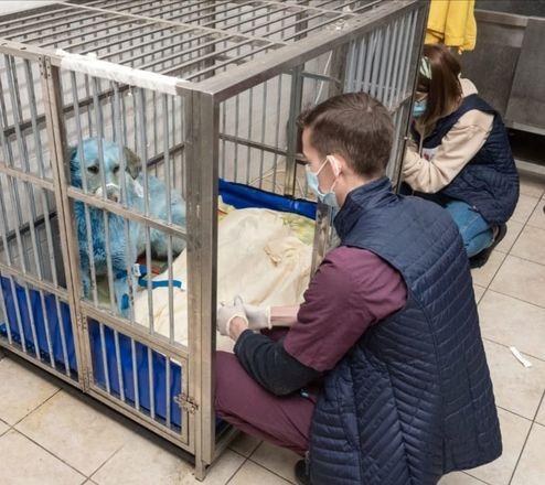 Семерых синих собак из Дзержинска доставили в госпиталь - фото 2