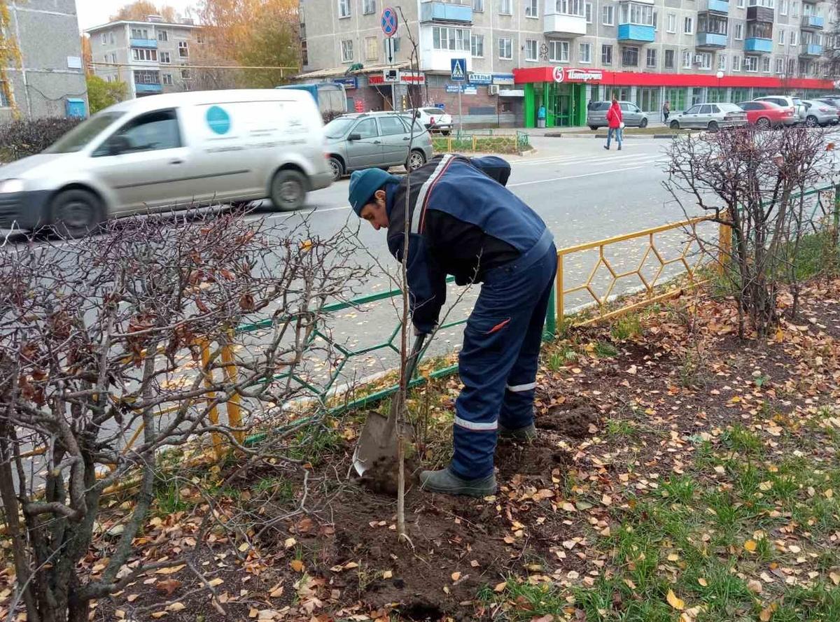 Новые растения высадили в сквере на улице Никиты Рыбакова - фото 1