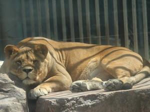 Нижегородскому зоопарку «Мишутка» нашли инвестора