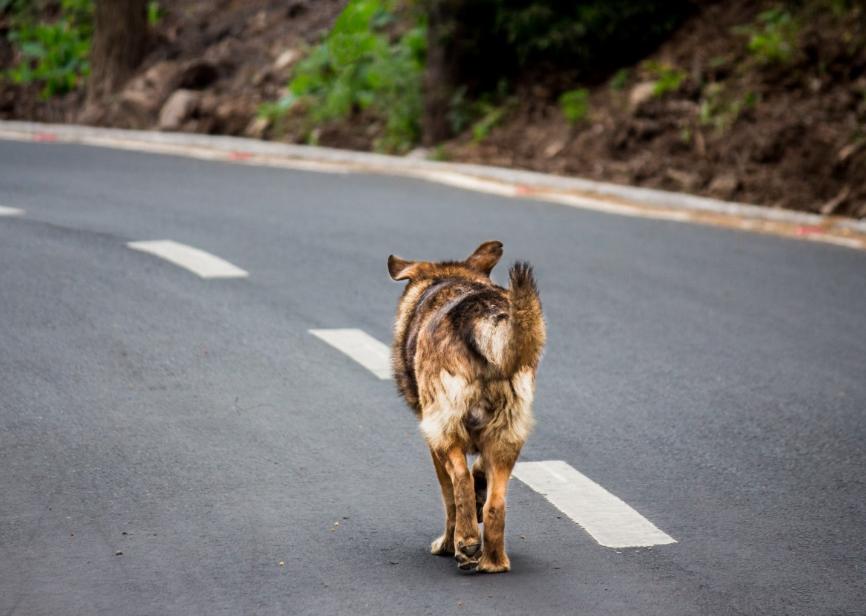 Юный тоншаевский мотоциклист попал в ДТП с собакой - фото 1